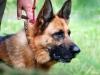 Uppletandeträning 2012-07-15