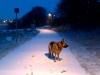 Vinterpromenad vid klubben/bron 2014-01-13