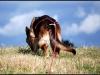 2011-12-26-426-yrla-sturup